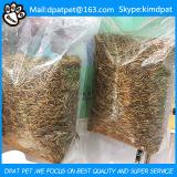 Freeze Dried Mealworms for Wild Bird