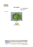 Synthetic Grass, Artificial Grass, Synthetic Turf manufacturer / supplier in China