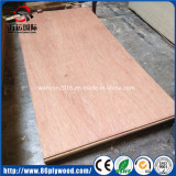 5mm 18mm One/Two Times Hot Press Commercial Bintangor Plywood