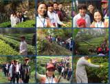 Clients visiting tea plantations