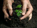 Organic Fertilizer (Fertilizer Application)