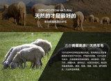 Tibet-sheep