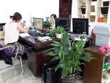 wofu office 3