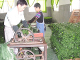 Rolls By Machine---Production Process of Artificial Hedge