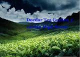 Deedar Tea Garden