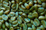 Certificate of Analysis - Green Coffee Bean Extract