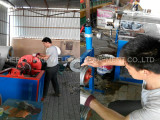 Machine Maintenance of PVC coated wire making machine in Mexico