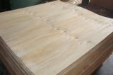 LVL Pine Veneer