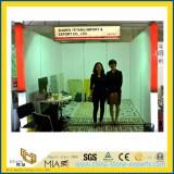 Yeyang Stone Event:2012 Verona fair H3 F6-7