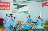 Hubei YongXing Food-- factory worksite