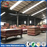Core repairing for Commercial Plywood/ Film faced plywood