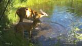 IP 68 Waterproof HD Trail camera scouting camera hunting camera pics
