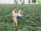 2016 CHINESE AGRICULTURAL PRODUCTS MARKET ANALYSIS REPORT
