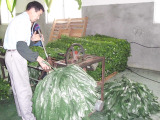 Rolls--Production Process of Artificial Hedge