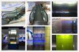 showroom elevator and escalator