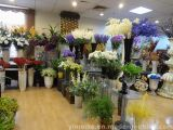 Craft Flowers Showroom