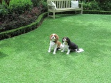grass for pets play