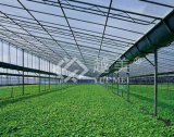 Mongolia agricultural greenhouse hollow sheet