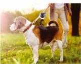 Adjustable Pet Heround Dog Harness Back Chest Fetch Strap Sheroulder Belt Mount Suit with Action Cam