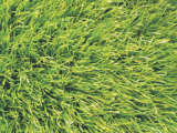 48000 Cluster / Per Square Meter Synthetic /Fake Artificial Grass Lawn, Artificial Turf (TY-9113K)