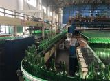 Green Beer Bottles Under Production