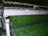 Weaving---Production Process of Artificial Hedge