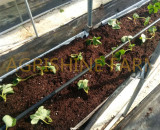 STRAWBERRY PLANTED ON SHELVES