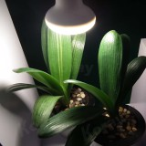 potted plant led grow light bulb