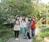 Rose Team