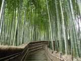 The Properties of Bamboo