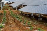 Solar energy cultivation