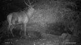 Night vision pics of Ereagle Wildlife Trail camera