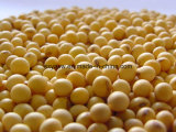Certificate of Analysis - Soybean Isoflavone 90%