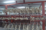 Automatic Conveyer System