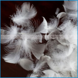 Hot sale 2-4cm/4-6cm washed white goose feather