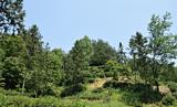Our tea garden