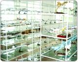 Showroom - 2