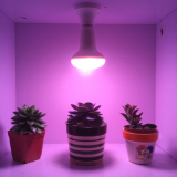 Led grow light for indoor plants