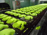 Latex foam gloves-production line
