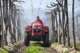 Lovol tractor is spraying in a vineyard in Chile