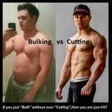 Bulking and Cutting Cycle Steroids