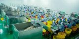 Hubei YongXing Food-- work site