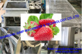 Shandong Blueberry production line