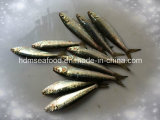 Supply Frozen seafood fish