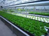 led grow light for plant factory