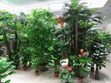 Green Plants Show