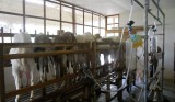 Goat Milking System Installed in Indonesia