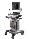4D Color Doppler Ultrasound