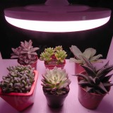 Led grow light for potted ornamental plants