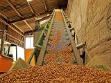 Wood pellet production site